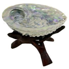 Abalone schelp met Cobra 3poot