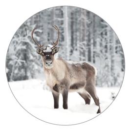 Wooncirkel | Rendier in sneeuw