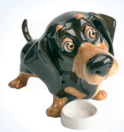 teckel dachshund
