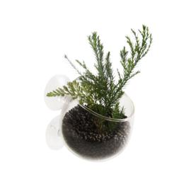 Plant Cup Glas 9*6*6cm