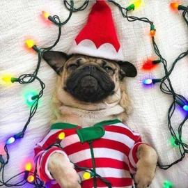 Hond geniet van de kerst