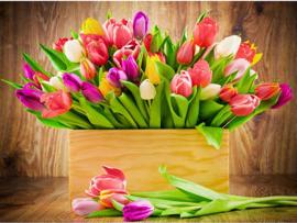 tulpen in een houten doosje 50X40 cm (vierkante steentjes)