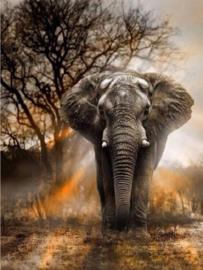 Full diamond painting olifant in natuur 60X80 CM (ronde steentjes)