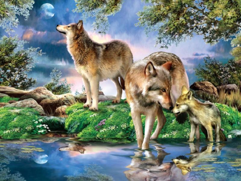 Wolf met Welp 80X60 CM