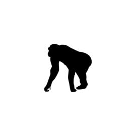 Aap - jungledieren