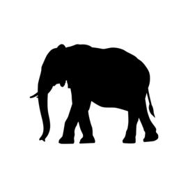 Olifant - jungledieren