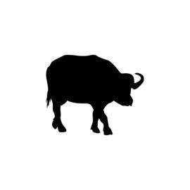 Buffel - jungledieren