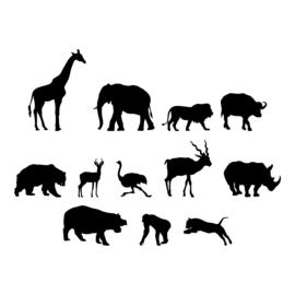 Struisvogel - jungledieren