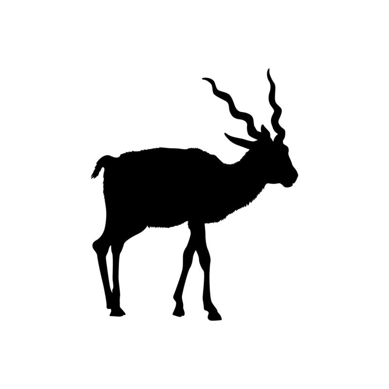Antilope - jungledieren