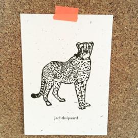 Wenskaart graspapier Jachtluipaard