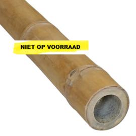 Bamboepaal Guadua Ø 5-7 x 400 cm