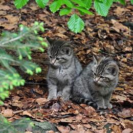 Katten informatie