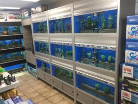 Welke vissen en planten? informatie