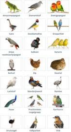Meer vogel rassen