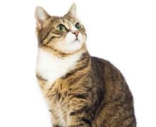 Katten algemene informatie