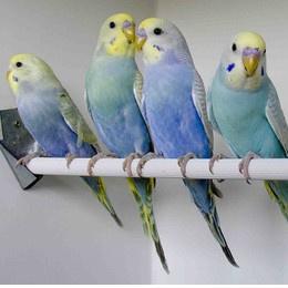 Vogel informatie