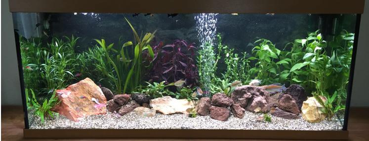 We beginnen een aquarium, maar hoe?