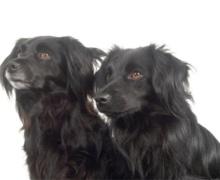 Honden algemene informatie