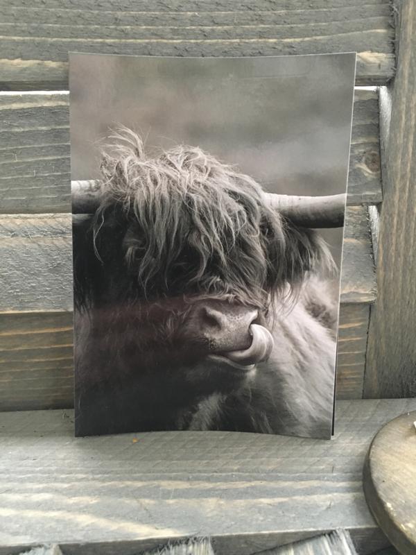 Ansichtkaart Schotse hooglander