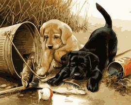 A1080 Diamond Painting vierkant 2 puppy's 40 x 50