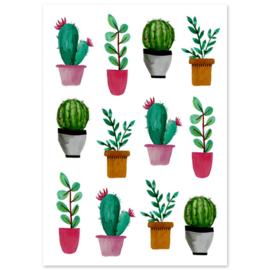 Liefs Karlijn cactussen