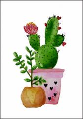 LIefs Karlijn cactus