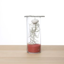 Jellyfish in glas