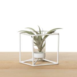 Metalen kubus, wit (met airplant)