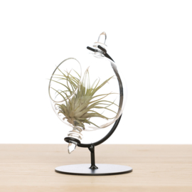 Small globe + tillandsia