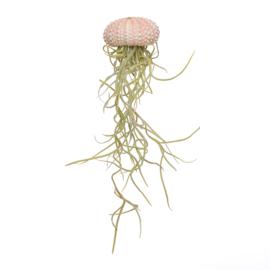 Jellyfish small roze + Tillandsia usneoides