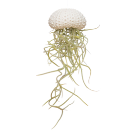 Jellyfish small wit + Tillandsia usneoides