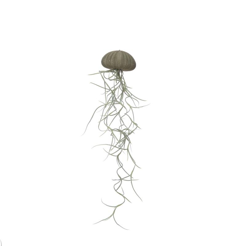 Jellyfish groen medium + spaans mos
