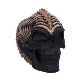 Schedel - Spine Head Skull - 18.5cm