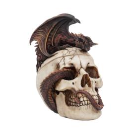Storage box - Draconic Craniotomy - 19,6cm