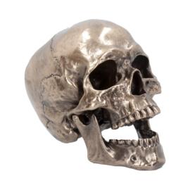 Schedel - Cranius - 22cm
