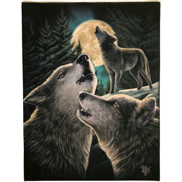 Canvas 50x70cm  - Wolf Song - Lisa Parker