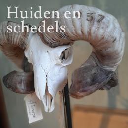 Huiden en schedels