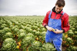 BIO-DEMETER Broccoli NL 6 kg doos (Invoer p/ st)