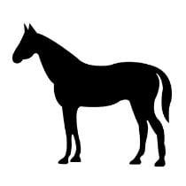 NRV Paard 500gr