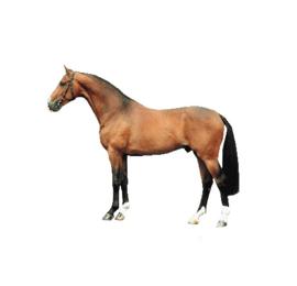 Paarden Rib vlees 1kg