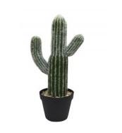 Cactus, 41 cm.