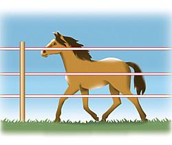 Raster voor paarden
