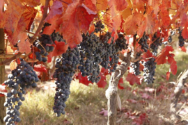 Chileense Montes wijnstreken