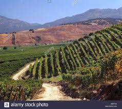Montes Apalta vallei, Colchagua