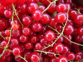 Bloed- bessen - per 250 gram