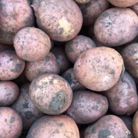 Bildtstar - 10 kilo van de klei - Stevig