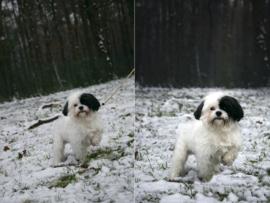 Fotohalsband voor honden | for dogs