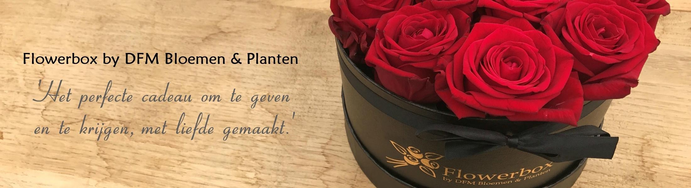 Flowerbox rozen