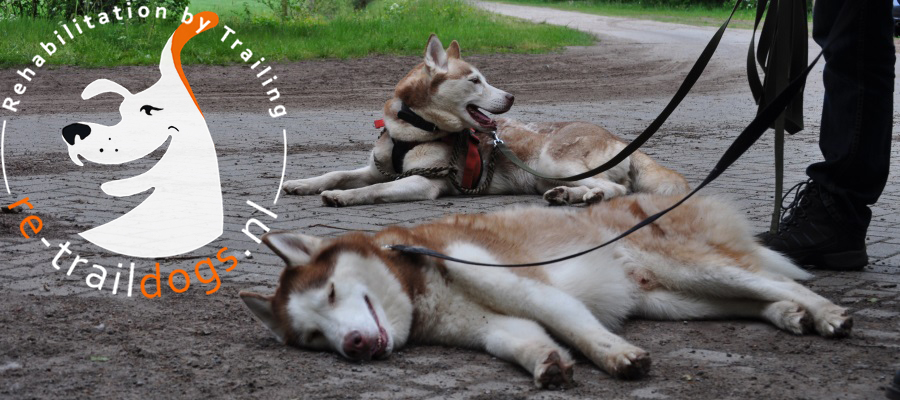 Re-Traildogs
