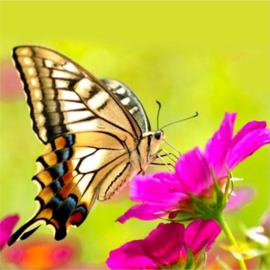 Diamond Painting 5D - Vlinder op eem bloem - 30x30 cm